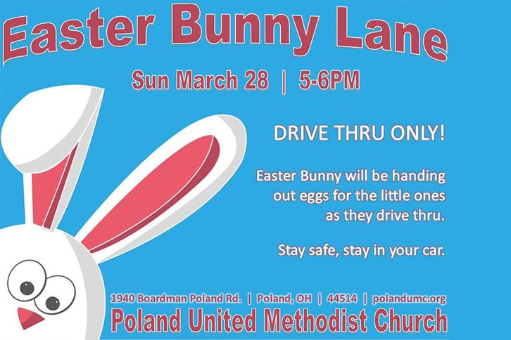 Bunny Drive Through Poland
