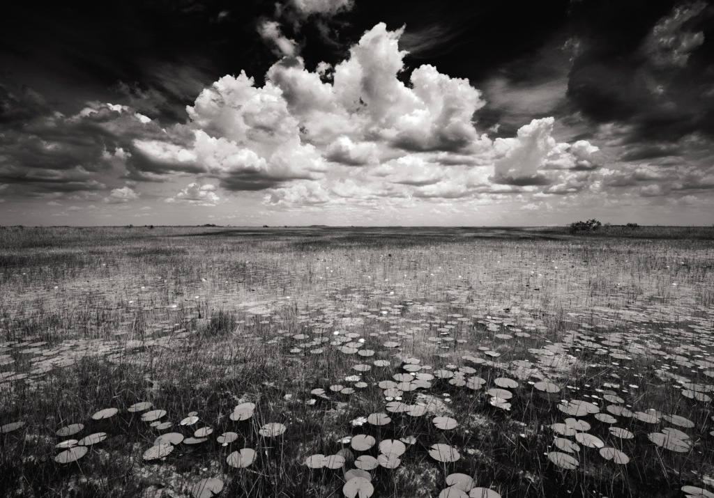 America's Everglades: Through the Lens of Clyde Butcher