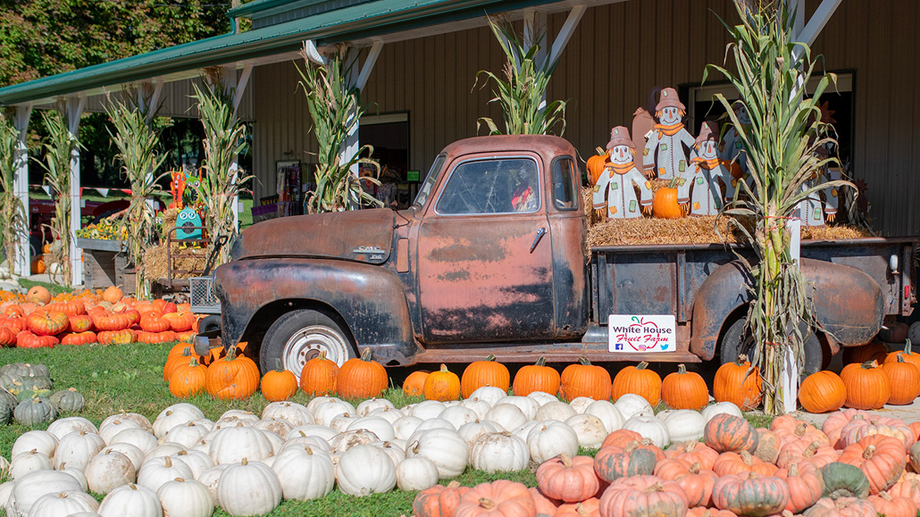 Fall activity options in Youngstown, Ohio.