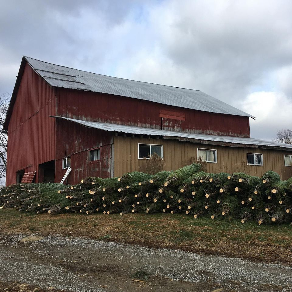 Fodor Tree Farm
