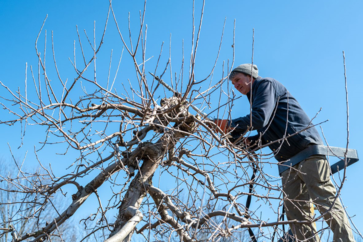 Fruit Tree Pruning Clinic