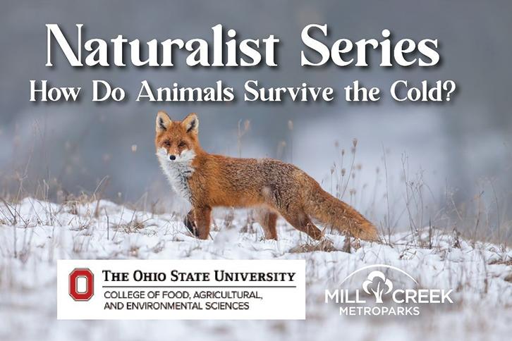 Naturalist Series