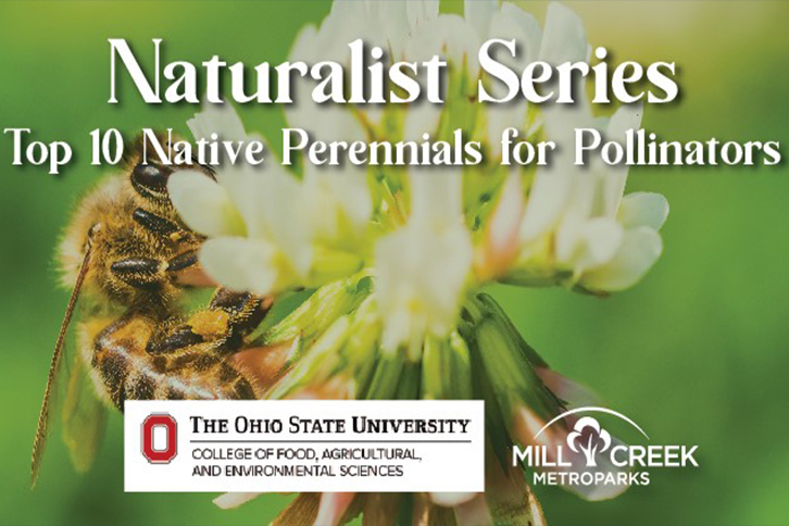 Naturalist Series